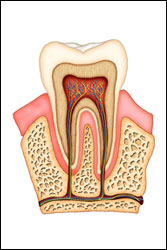 Root Canal Oakville